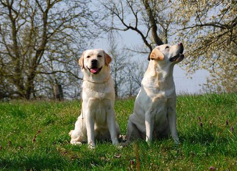 Maple und Hermine :-)