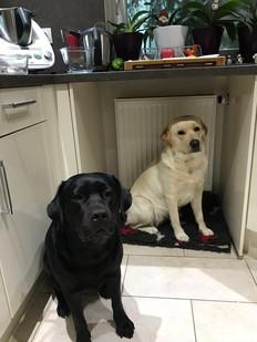 Essen ?? Gib uns Essen...wir verhungern.