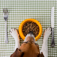 Dog Food (1).png