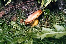 au départ du gite auberge la soulan ,suivez nos conseils pour les champignons