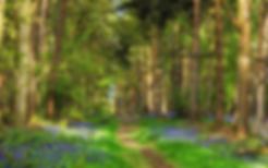 Сосновый лес.webp
