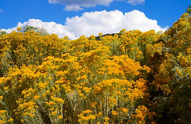 US New Mexico Sante Fe 2012 - 35.jpg