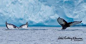 8-25-16 Ilulissat - Jacobshavn Icefjord
