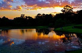 Australia New South Wales Kangaroo Valle