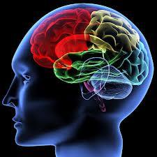 The Brain & Marketing