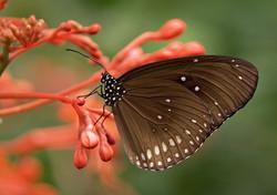 butterfly-354528_1920