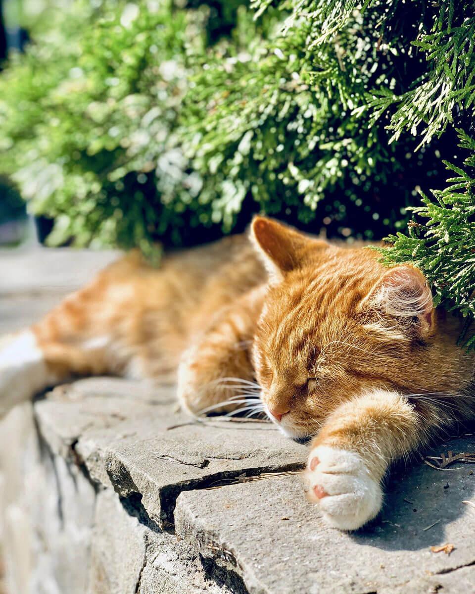 cat-5727135_1920