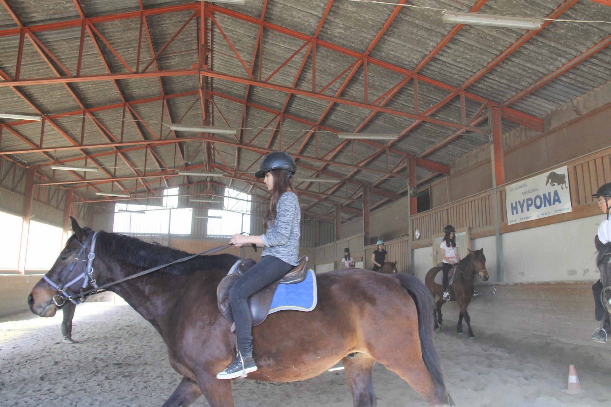 Beginner Horse Riding