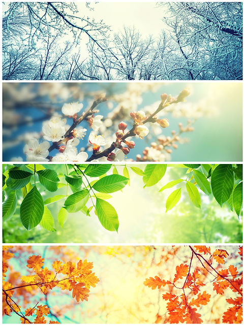 Four seasons. A pictures that shows four