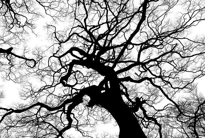 tree-894903_1280.jpg