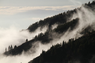 fog-1220491_1920.jpg