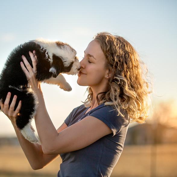 Aussiedoodle Puppy Kiss