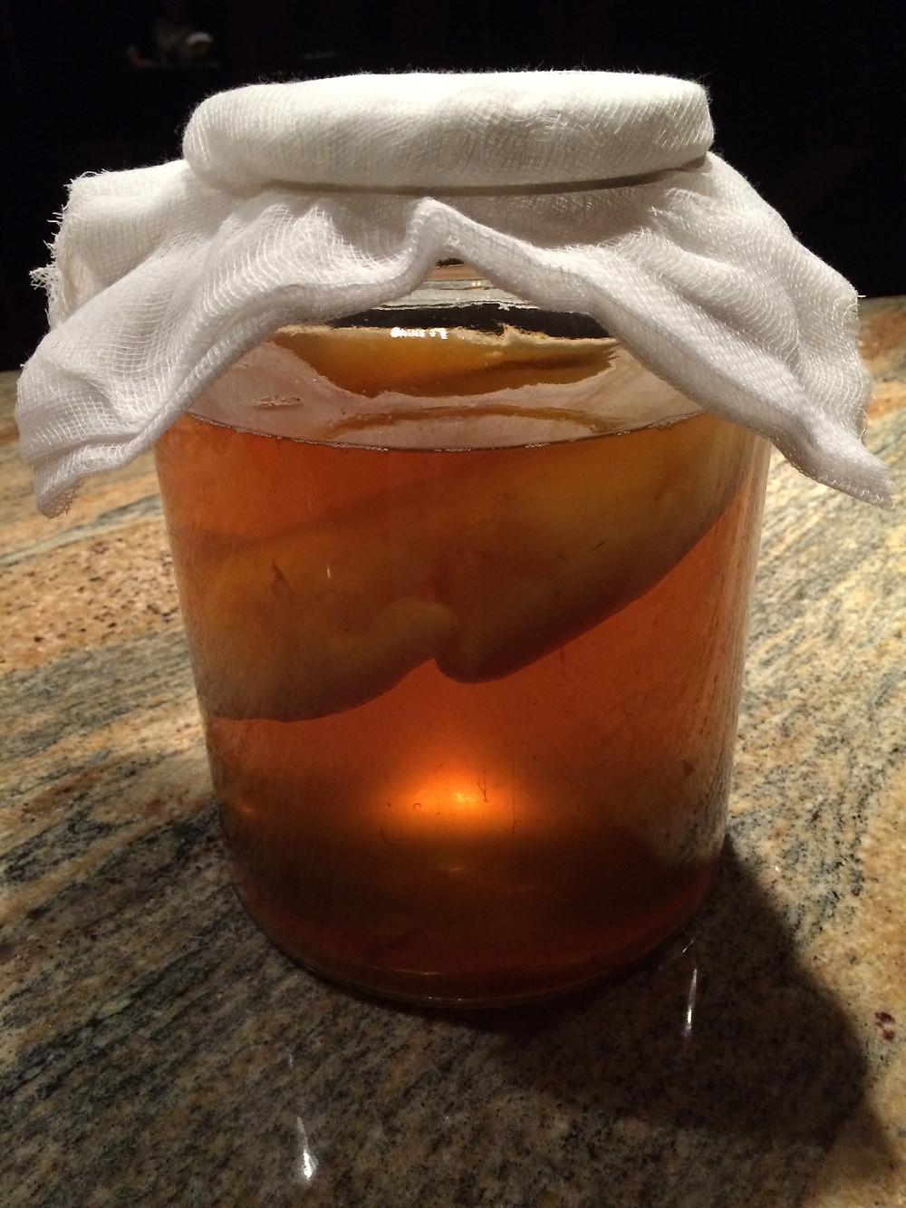 kombucha brewing in a jar