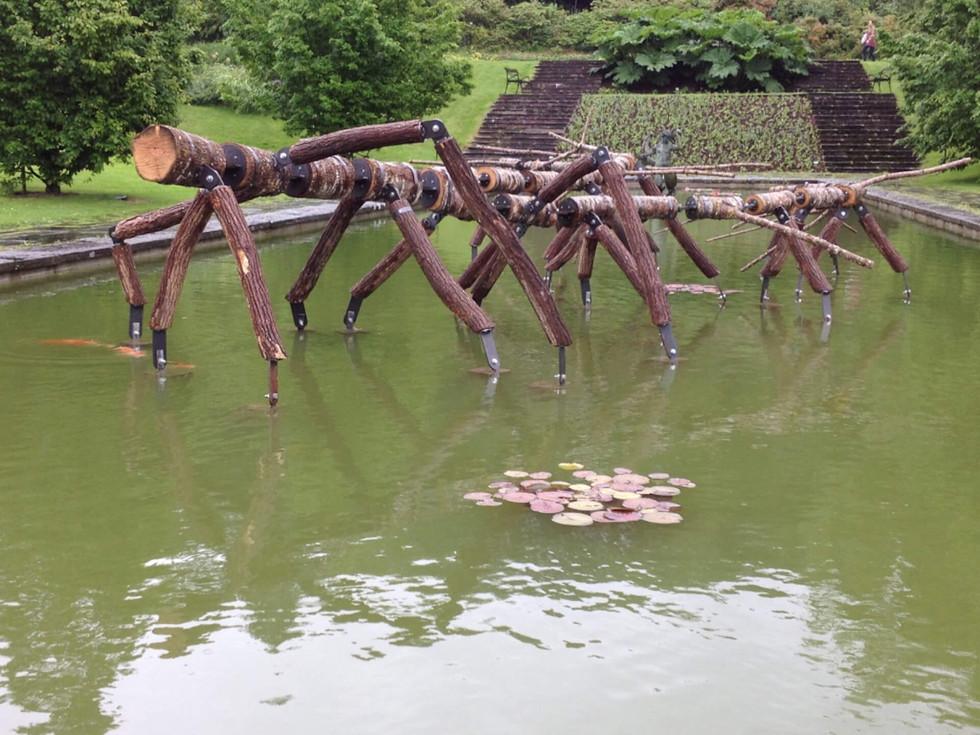 WILL BECKERS - Origin of Species 10