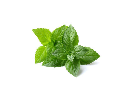 Peppermint, leaves
