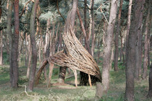 WILL BECKERS -  Forest Follies 17