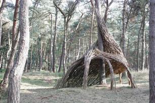 WILL BECKERS -  Forest Follies 03