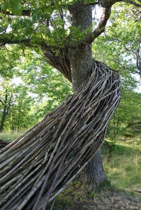 WILL BECKERS - Nature's Memory 11