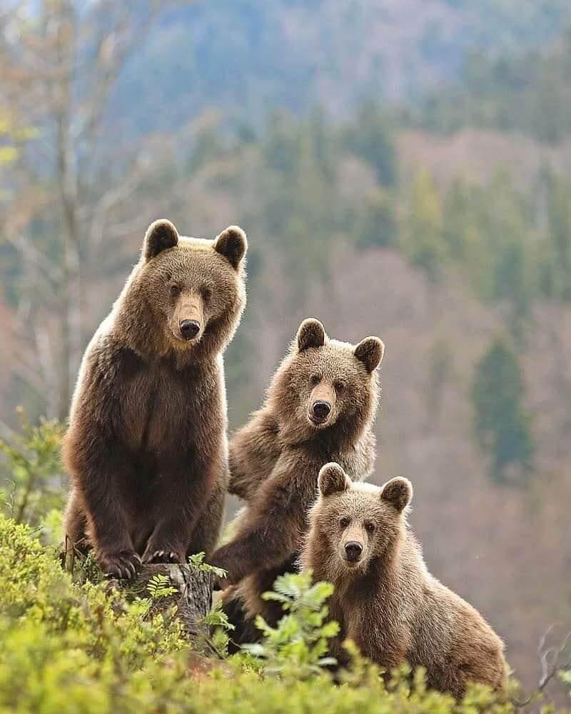 Medvedia Štôlňa - 40,3 k