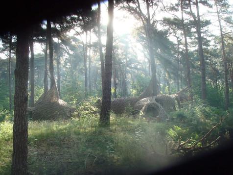 WILL BECKERS -  Forest Follies 01