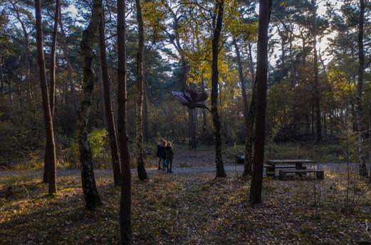 WILL BECKERS -  Forest Follies 18