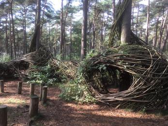WILL BECKERS -  Forest Follies 14