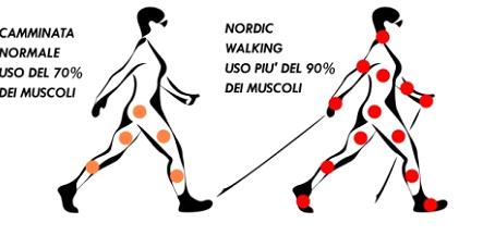 Meglio una camminata o Nordic Walking?