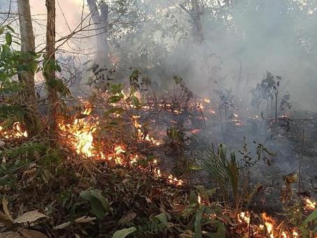 Comunicado da Repam sobre a grave situação na Amazônia