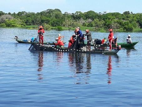 Amazônia: jesuítas ao lado dos indígenas em vista do Sínodo