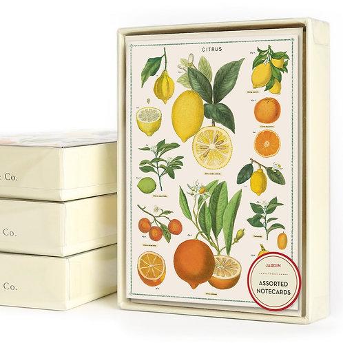 Cavallini & Co. Jardin Boxed Notecards