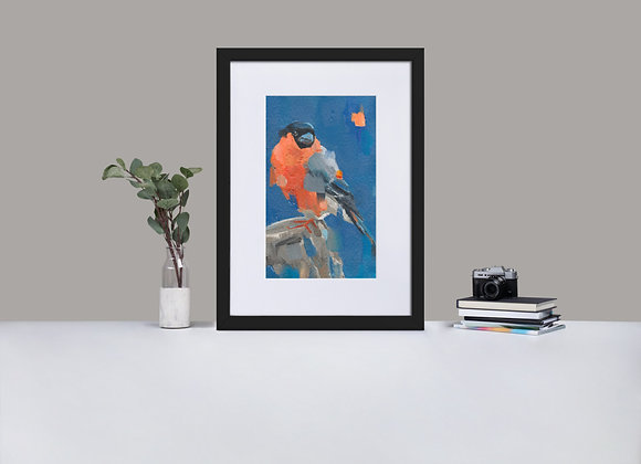 Bullfinch Framed Print with Mount