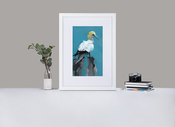 Gannet Framed Print with Mount