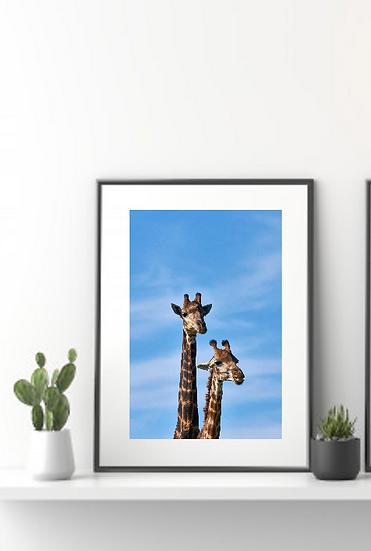 2 Giraffes Print