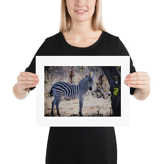 Lone Zebra Print