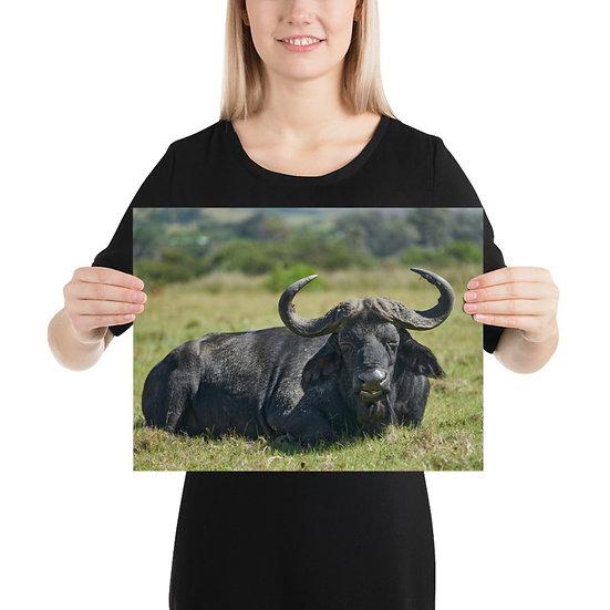 Lone Buffalo Print