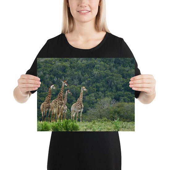 4 Giraffes - Print