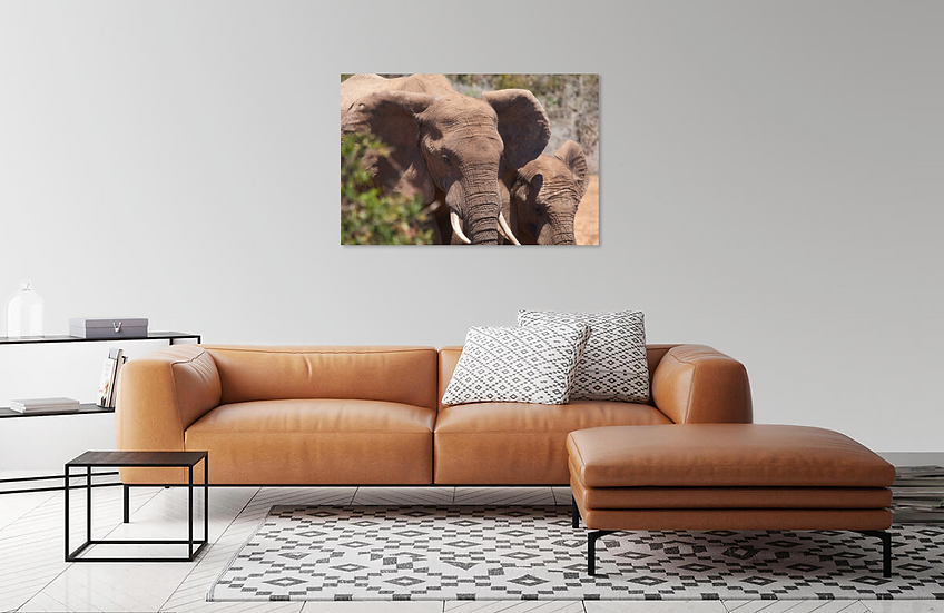 Elephant Close-up Print