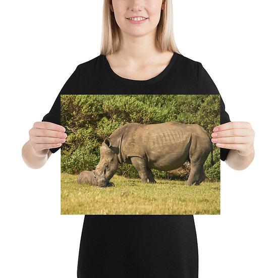 2 Rhinos - Print