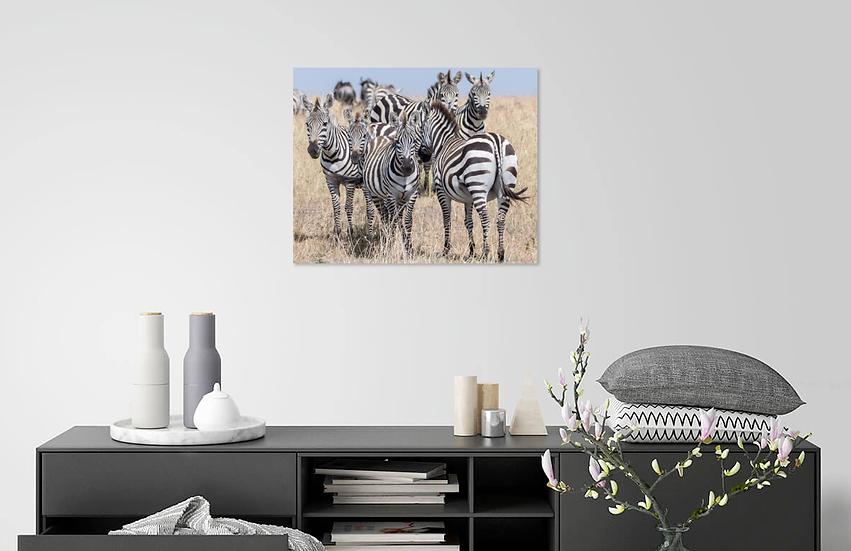 """Playful Zebras"" - Print"