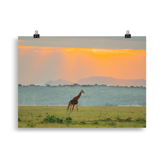 Surrounded by Colour - Giraffe Poster