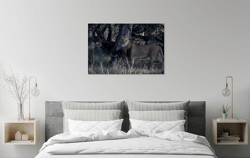 """""""Lion in the Dark"""" - Print"""