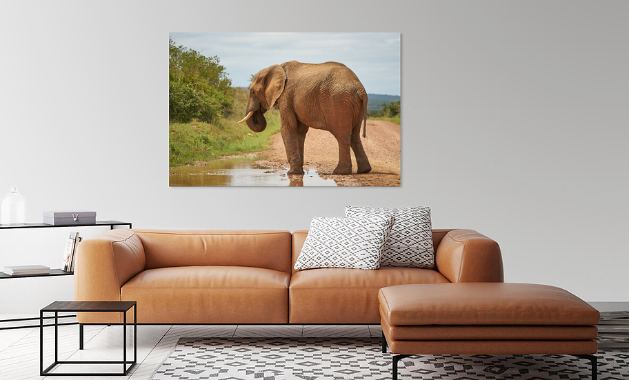 """By the Water"" - Elephant Print"
