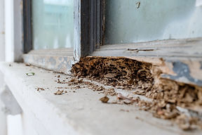 Window frame had been damaged by termite