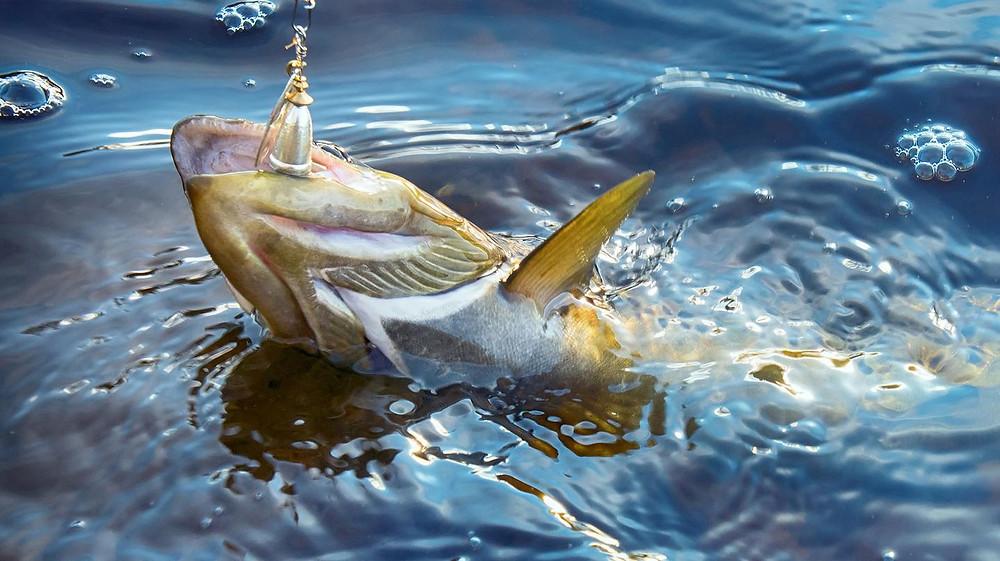 Pesca de un pez