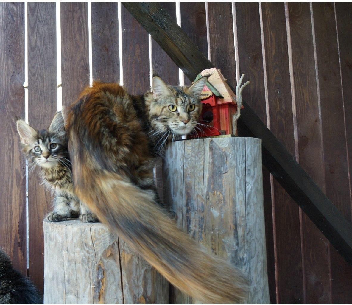 Хильда и первые котята