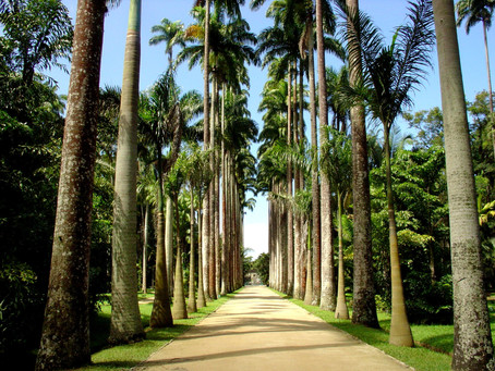BOTANICAL GARDEN IN RIO DE JANEIRO THE WHIM OF A KING IS NOW A BRAZILIAN NATURAL TREASURE