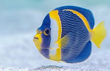 fish-says.jpg