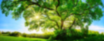 Árvore do Grupo Yba