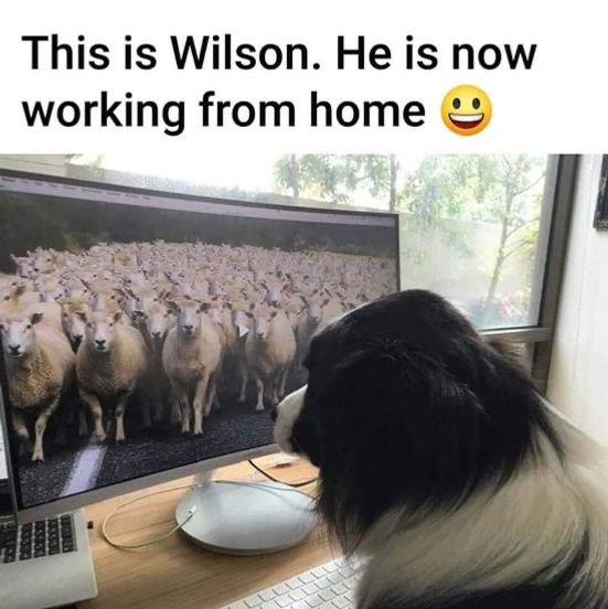 Dog working from home.jpg