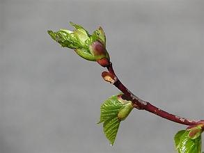 New growth-2.jpg